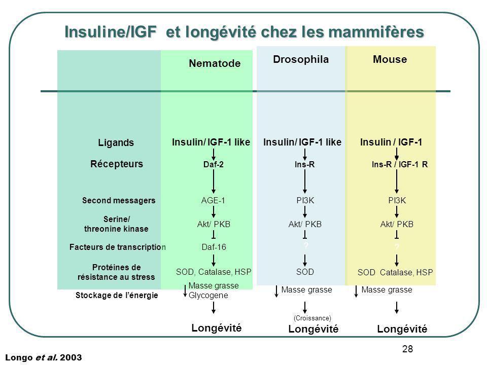 28 Insuline/IGF et longévité chez les mammifères Longo et al. 2003 Ligands Récepteurs Second messagers Serine/ threonine kinase Facteurs de transcript