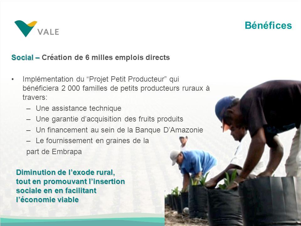 Bénéfices Social – Social – Création de 6 milles emplois directs Implémentation du Projet Petit Producteur qui bénéficiera 2 000 familles de petits pr