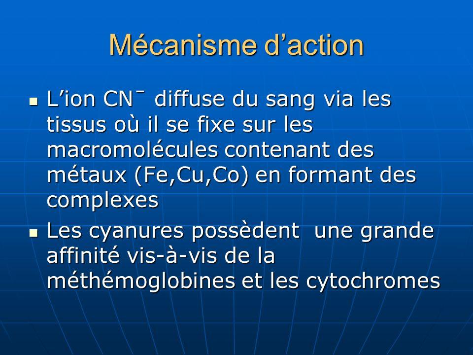 Mécanisme daction Lion CNˉ diffuse du sang via les tissus où il se fixe sur les macromolécules contenant des métaux (Fe,Cu,Co) en formant des complexe