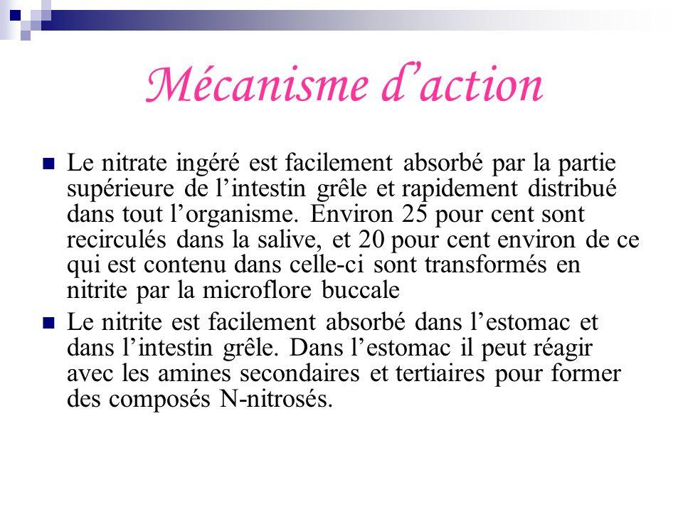 Mécanisme daction Le nitrate ingéré est facilement absorbé par la partie supérieure de lintestin grêle et rapidement distribué dans tout lorganisme. E