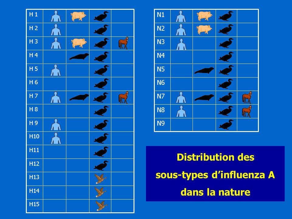 H15 H14 H13 H12 H11 H10 H 9 H 8 H 7 H 6 H 5 H 4 H 3 H 2 H 1 N9 N8 N7 N6 N5 N4 N3 N2 N1 Distribution des sous-types dinfluenza A dans la nature