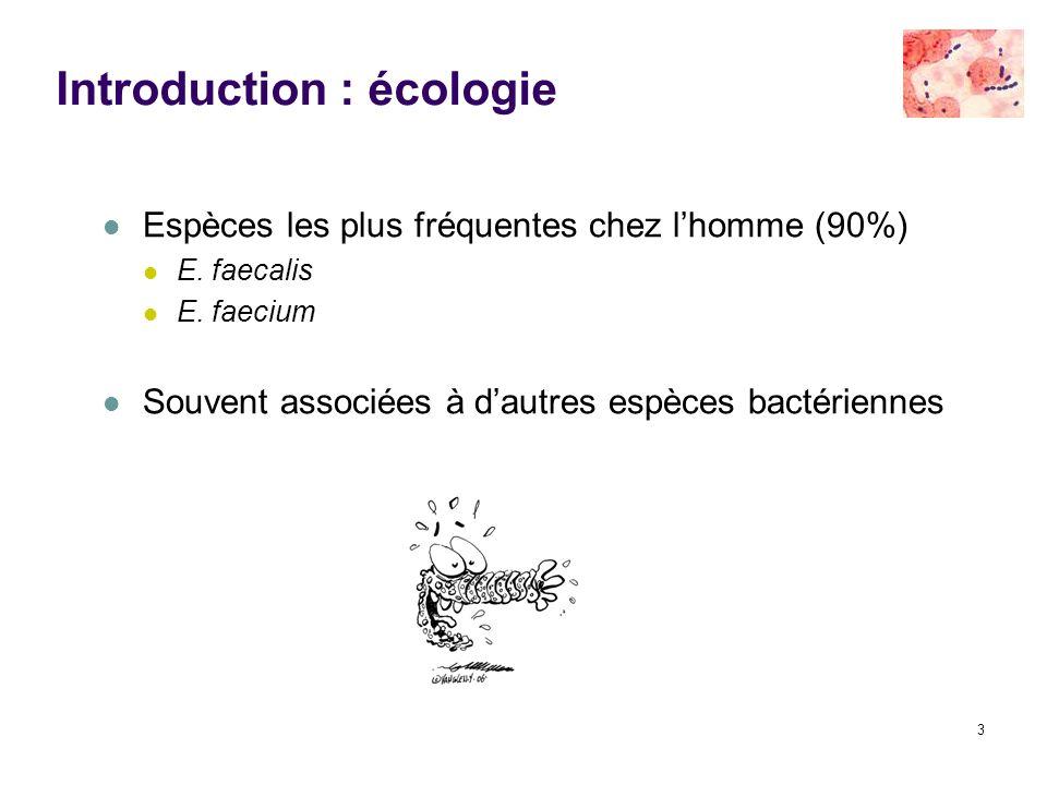 3 Introduction : écologie Espèces les plus fréquentes chez lhomme (90%) E. faecalis E. faecium Souvent associées à dautres espèces bactériennes
