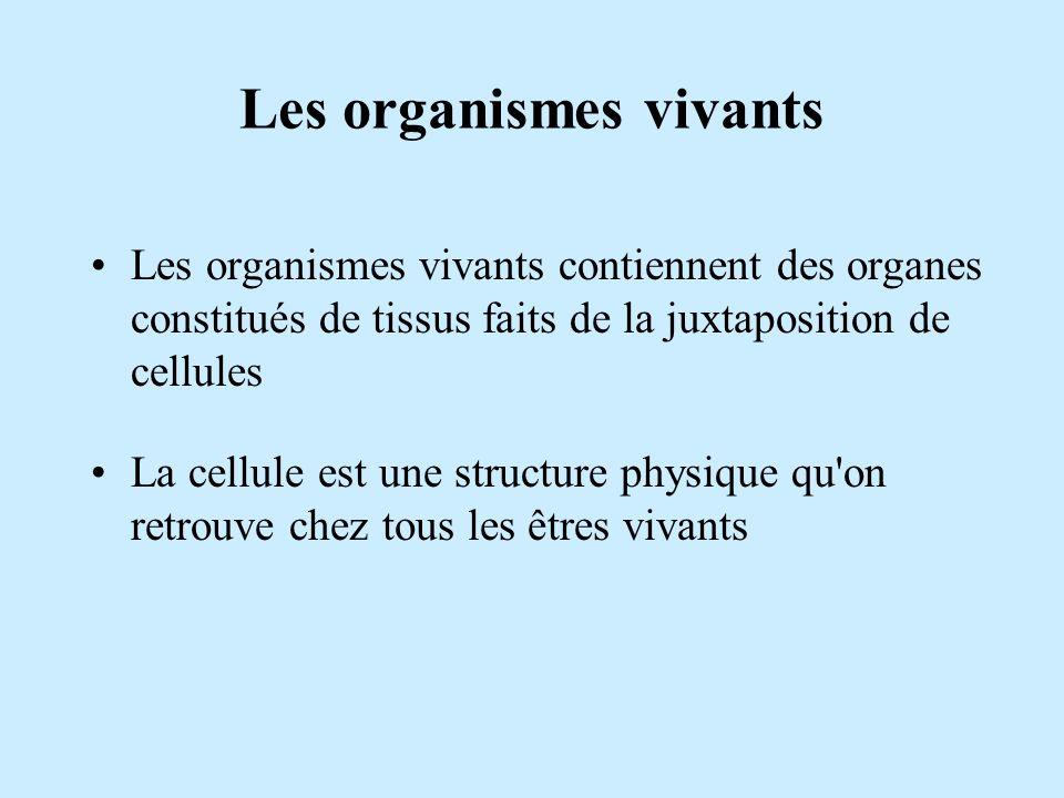 Les organismes vivants Les organismes vivants contiennent des organes constitués de tissus faits de la juxtaposition de cellules La cellule est une st