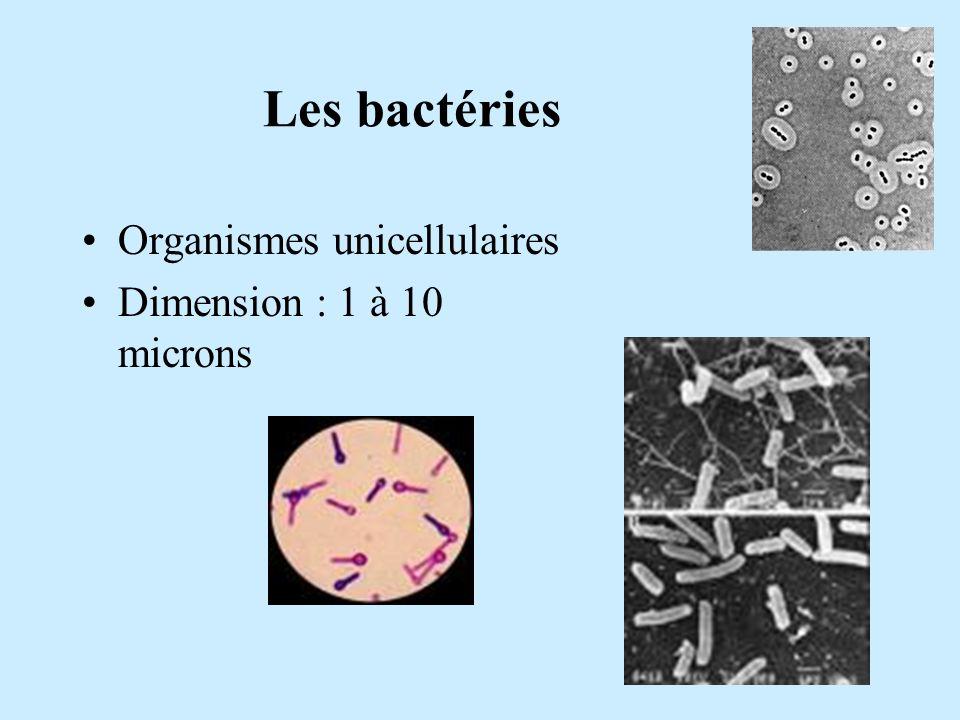 Les bactéries Organismes unicellulaires Dimension : 1 à 10 microns