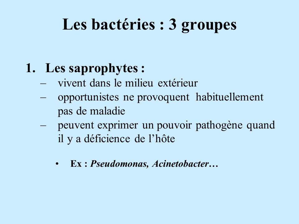 Les bactéries : 3 groupes 1.Les saprophytes : –vivent dans le milieu extérieur –opportunistes ne provoquent habituellement pas de maladie –peuvent exp