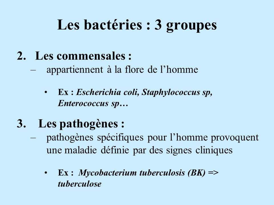 Les bactéries : 3 groupes 2. Les commensales : –appartiennent à la flore de lhomme Ex : Escherichia coli, Staphylococcus sp, Enterococcus sp… 3. Les p
