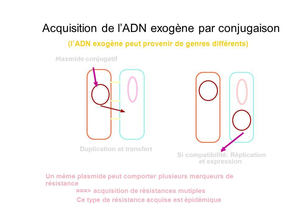 Duplication et transfert P lasmide conjugatif Si compatibilité: Réplication et expression (lADN exogène peut provenir de genres différents) Un même pl