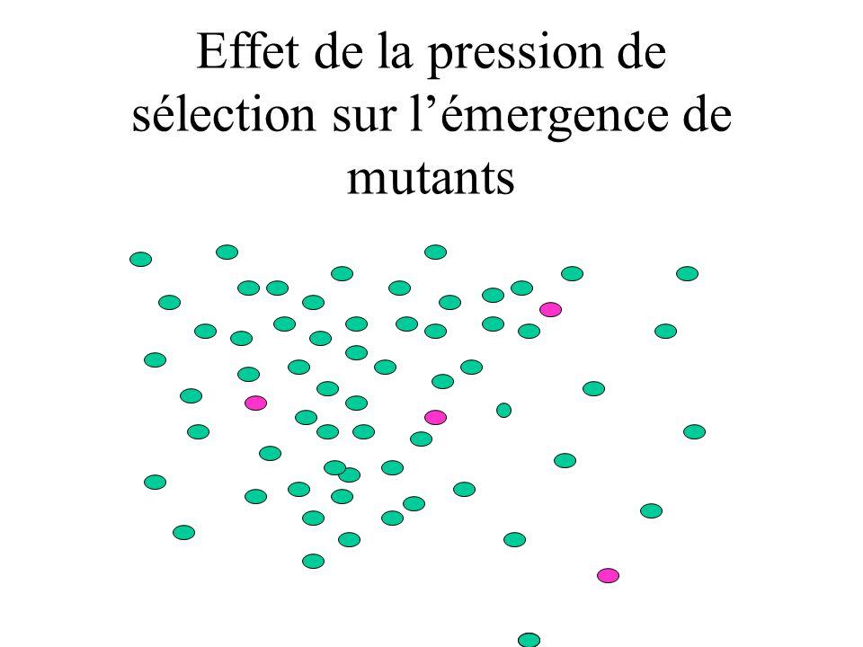 Effet de la pression de sélection sur lémergence de mutants