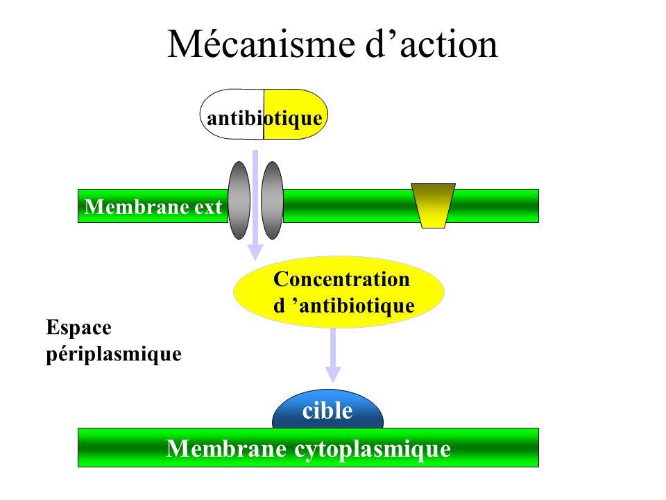 Mécanisme daction cible Membrane ext Membrane cytoplasmique Espace périplasmique antibiotique Concentration d antibiotique