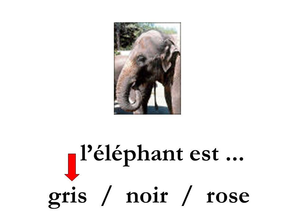 léléphant est... gris / noir / rose