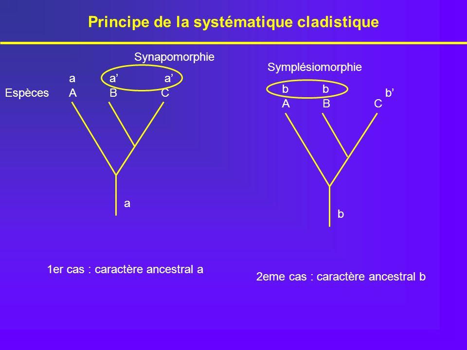 Principe de la systématique cladistique 1er cas : caractère ancestral a EspècesABC a aaa ABC b bb b 2eme cas : caractère ancestral b Synapomorphie Sym