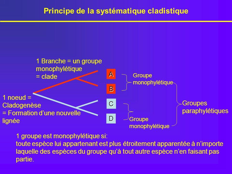 1 Branche = un groupe monophylétique = clade Principe de la systématique cladistique 1 groupe est monophylétique si: toute espèce lui appartenant est
