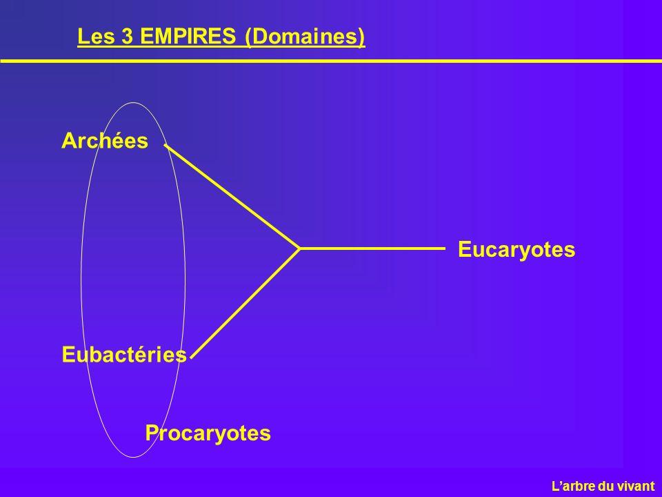 Les 3 EMPIRES (Domaines) Archées Eubactéries Eucaryotes Larbre du vivant Procaryotes