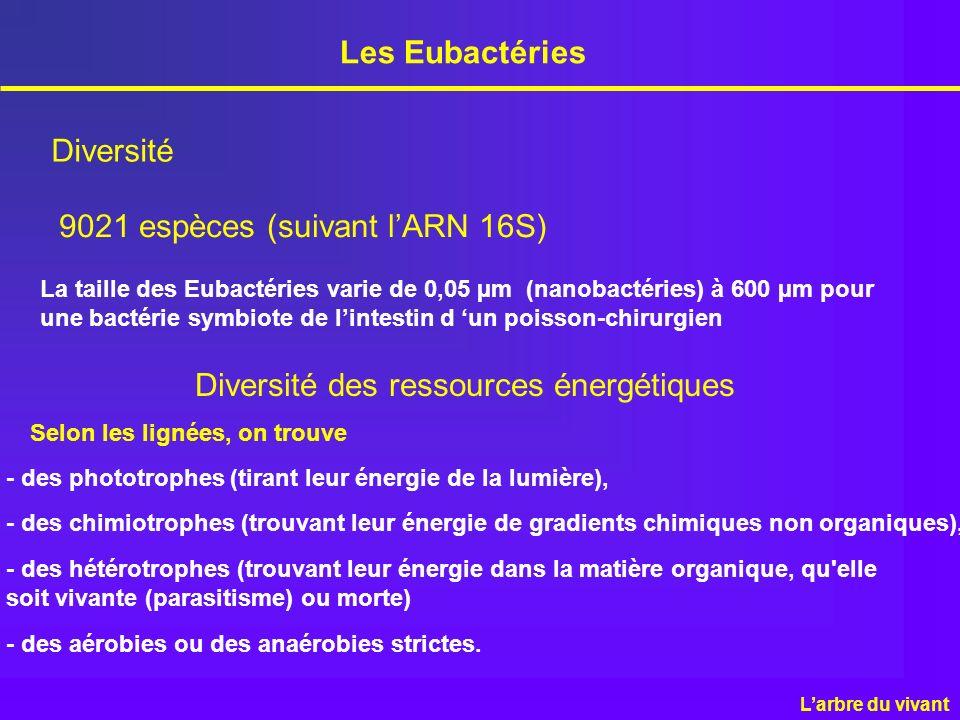 Les Eubactéries Diversité 9021 espèces (suivant lARN 16S) La taille des Eubactéries varie de 0,05 µm (nanobactéries) à 600 µm pour une bactérie symbio
