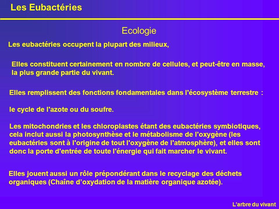 Les Eubactéries Ecologie Elles jouent aussi un rôle prépondérant dans le recyclage des déchets organiques (Chaîne doxydation de la matière organique a