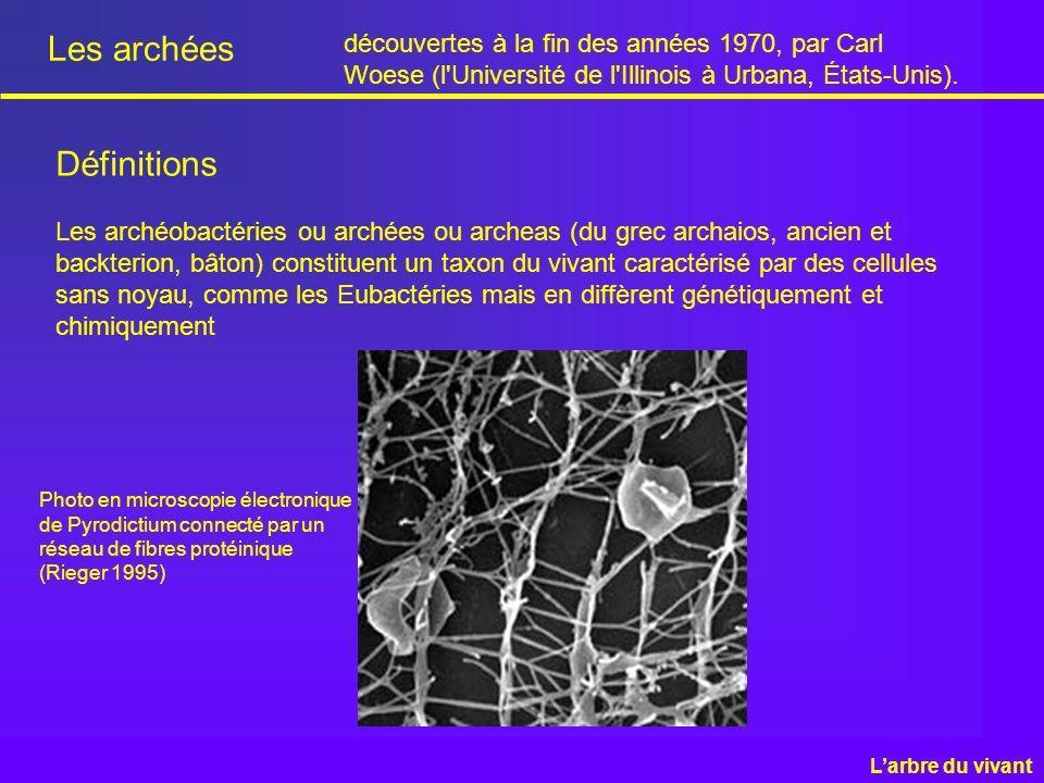 Les archées Les archéobactéries ou archées ou archeas (du grec archaios, ancien et backterion, bâton) constituent un taxon du vivant caractérisé par d