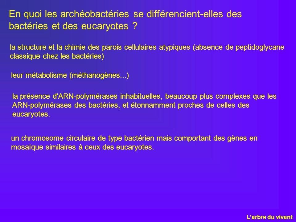 En quoi les archéobactéries se différencient-elles des bactéries et des eucaryotes ? Larbre du vivant la structure et la chimie des parois cellulaires