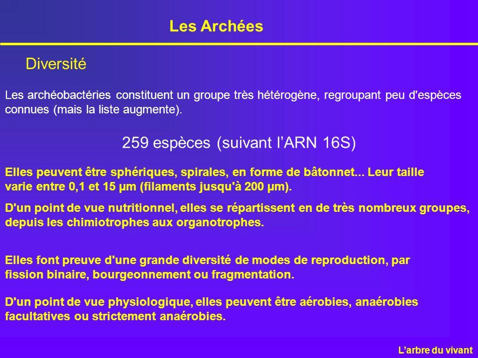 Les Archées Diversité 259 espèces (suivant lARN 16S) Les archéobactéries constituent un groupe très hétérogène, regroupant peu d'espèces connues (mais