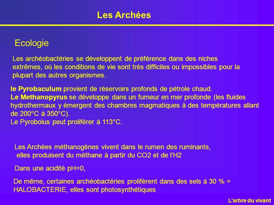Les Archées Ecologie Les archéobactéries se développent de préférence dans des niches extrêmes, où les conditions de vie sont très difficiles ou impos