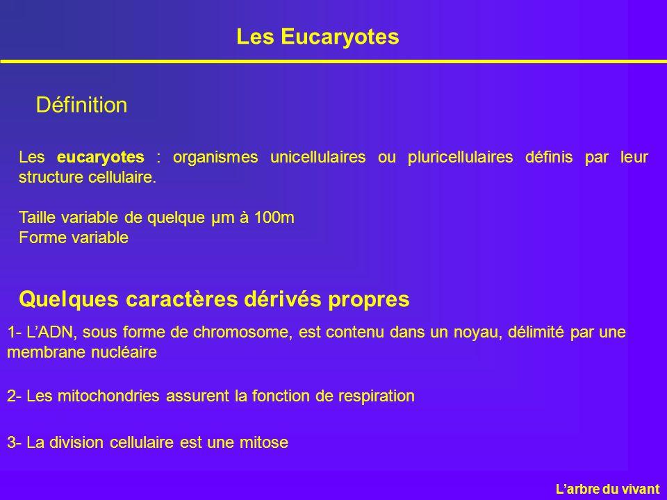 Les Eucaryotes Définition Les eucaryotes : organismes unicellulaires ou pluricellulaires définis par leur structure cellulaire. Taille variable de que