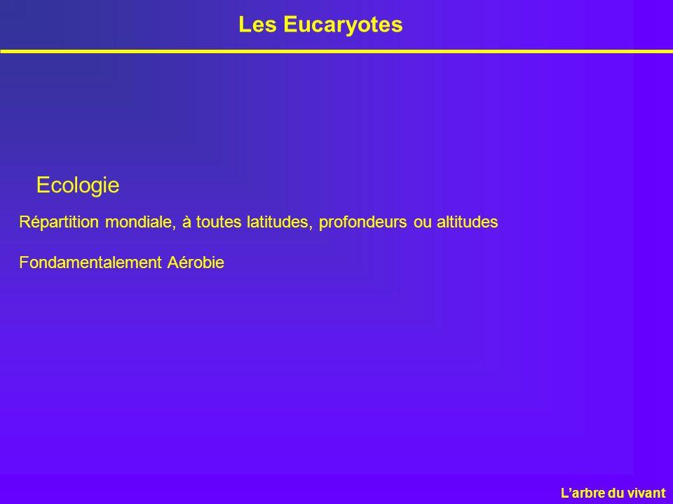 Les Eucaryotes Ecologie Répartition mondiale, à toutes latitudes, profondeurs ou altitudes Fondamentalement Aérobie Larbre du vivant