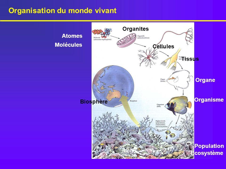 Organisation du monde vivant Atomes Molécules Organe Organisme Population Cellules Organites Biosphère Ecosystème Tissus