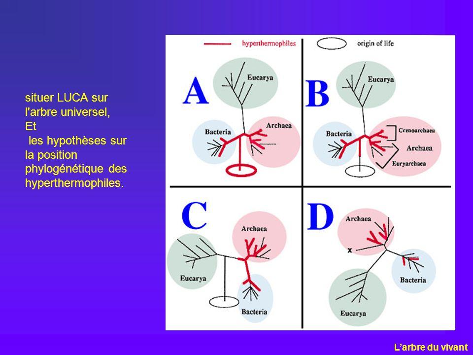 situer LUCA sur l'arbre universel, Et les hypothèses sur la position phylogénétique des hyperthermophiles. Larbre du vivant