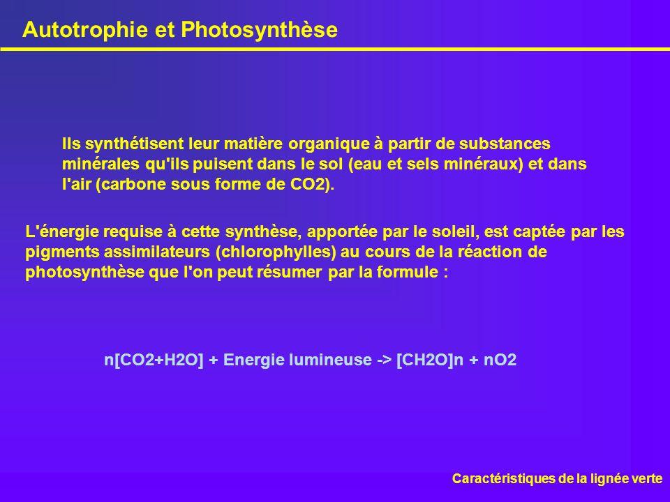 Autotrophie et Photosynthèse Caractéristiques de la lignée verte L'énergie requise à cette synthèse, apportée par le soleil, est captée par les pigmen