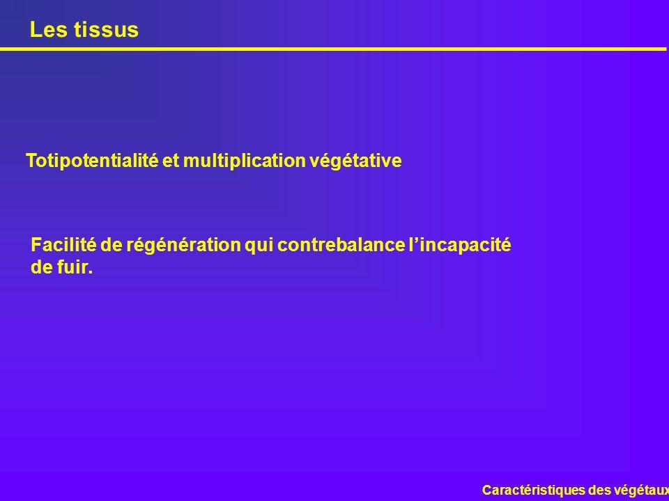 Les tissus Caractéristiques des végétaux Totipotentialité et multiplication végétative Facilité de régénération qui contrebalance lincapacité de fuir.