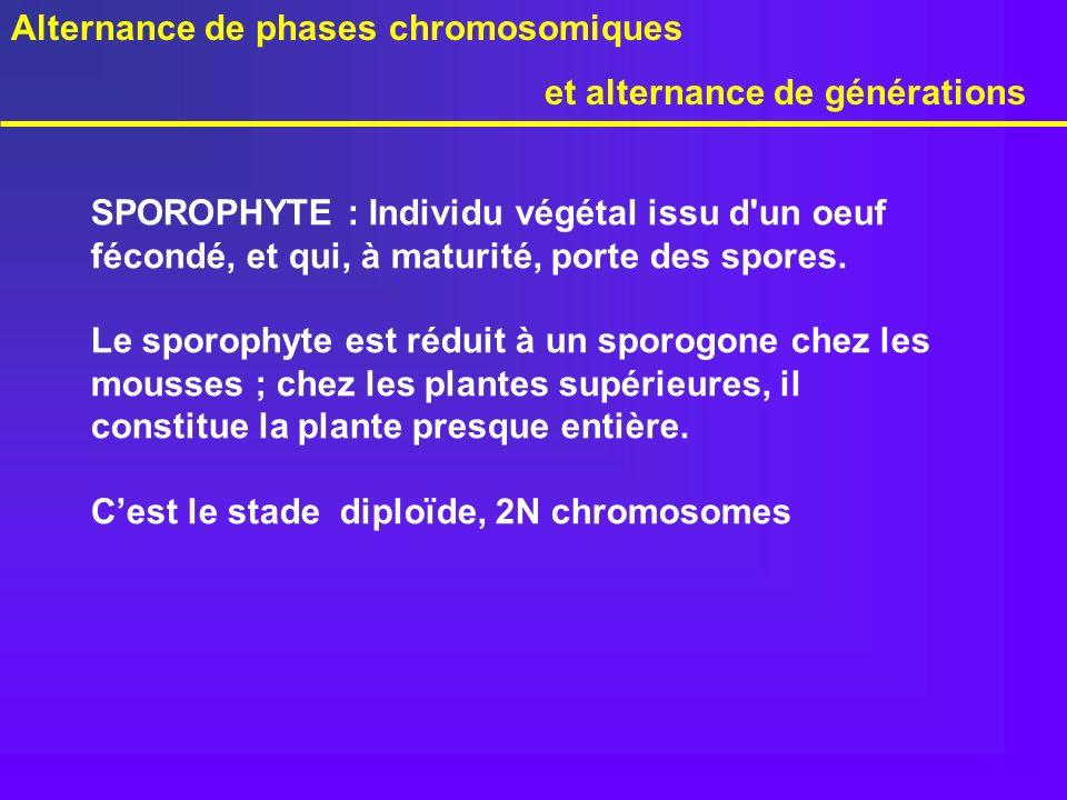 SPOROPHYTE : Individu végétal issu d'un oeuf fécondé, et qui, à maturité, porte des spores. Le sporophyte est réduit à un sporogone chez les mousses ;