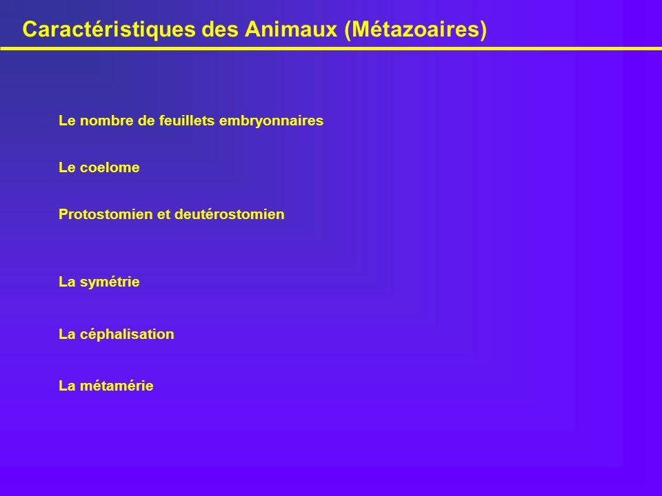 Caractéristiques des Animaux (Métazoaires) La symétrie Le nombre de feuillets embryonnaires Le coelome La métamérie La céphalisation Protostomien et d
