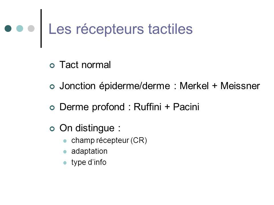 Les récepteurs tactiles Tact normal Jonction épiderme/derme : Merkel + Meissner Derme profond : Ruffini + Pacini On distingue : champ récepteur (CR) a