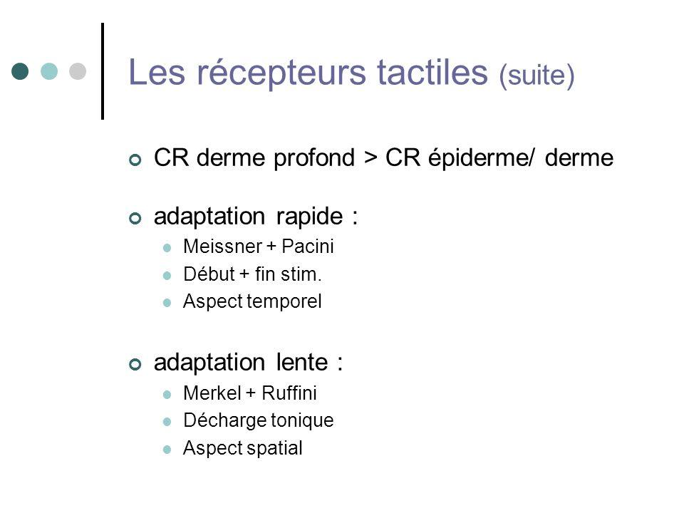 Les récepteurs tactiles (suite) CR derme profond > CR épiderme/ derme adaptation rapide : Meissner + Pacini Début + fin stim. Aspect temporel adaptati