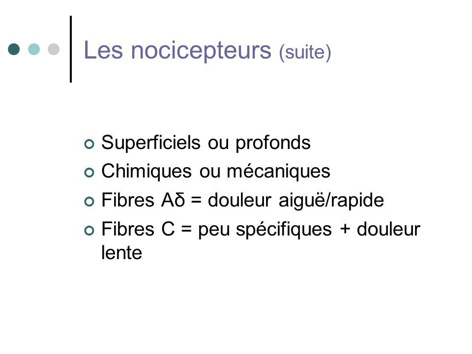 Les nocicepteurs (suite) Superficiels ou profonds Chimiques ou mécaniques Fibres Aδ = douleur aiguë/rapide Fibres C = peu spécifiques + douleur lente