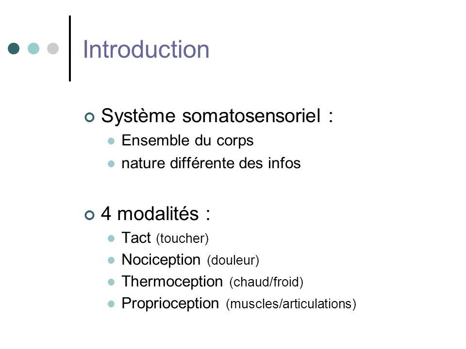 Introduction Système somatosensoriel : Ensemble du corps nature différente des infos 4 modalités : Tact (toucher) Nociception (douleur) Thermoception