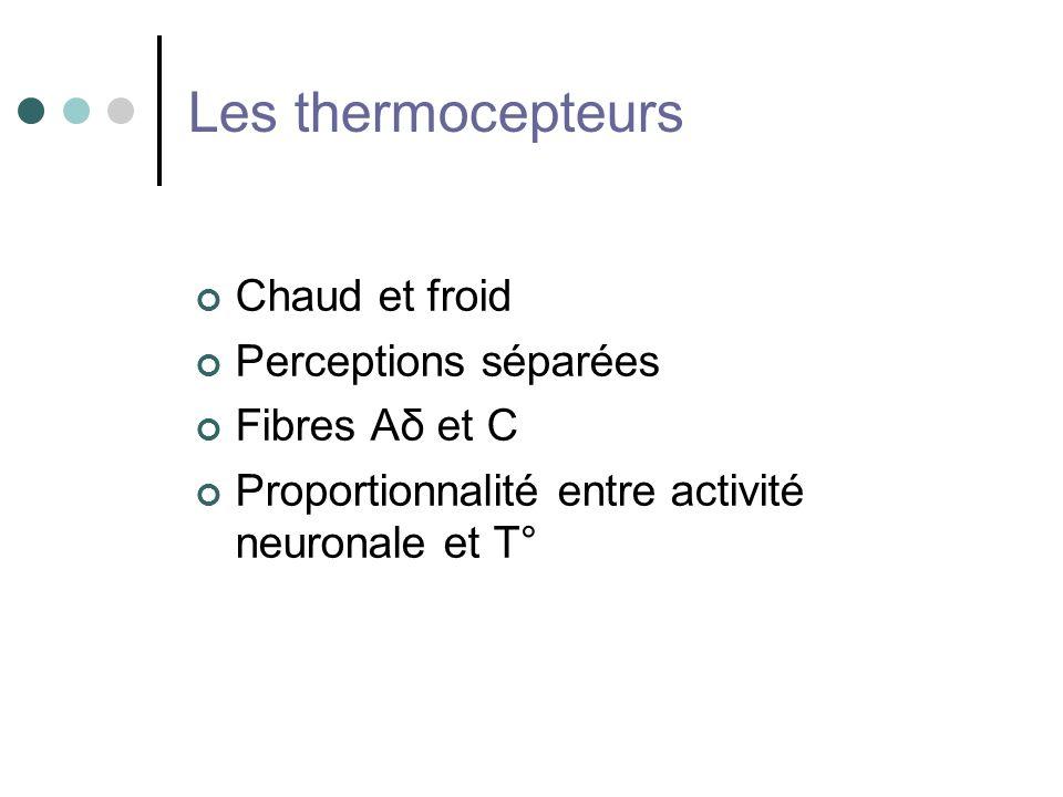 Les thermocepteurs Chaud et froid Perceptions séparées Fibres Aδ et C Proportionnalité entre activité neuronale et T°