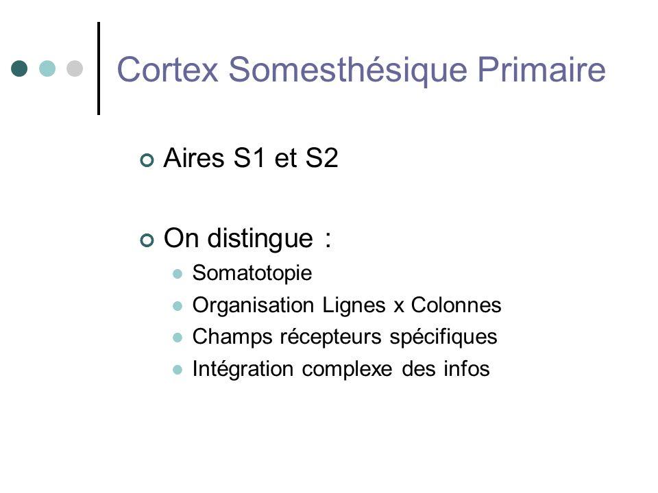 Cortex Somesthésique Primaire Aires S1 et S2 On distingue : Somatotopie Organisation Lignes x Colonnes Champs récepteurs spécifiques Intégration compl