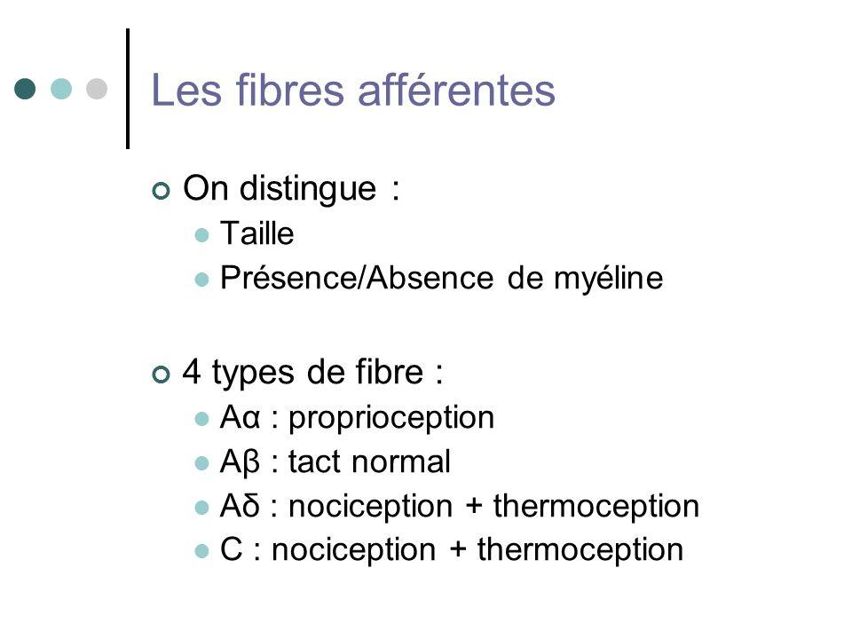 Les fibres afférentes On distingue : Taille Présence/Absence de myéline 4 types de fibre : Aα : proprioception Aβ : tact normal Aδ : nociception + the