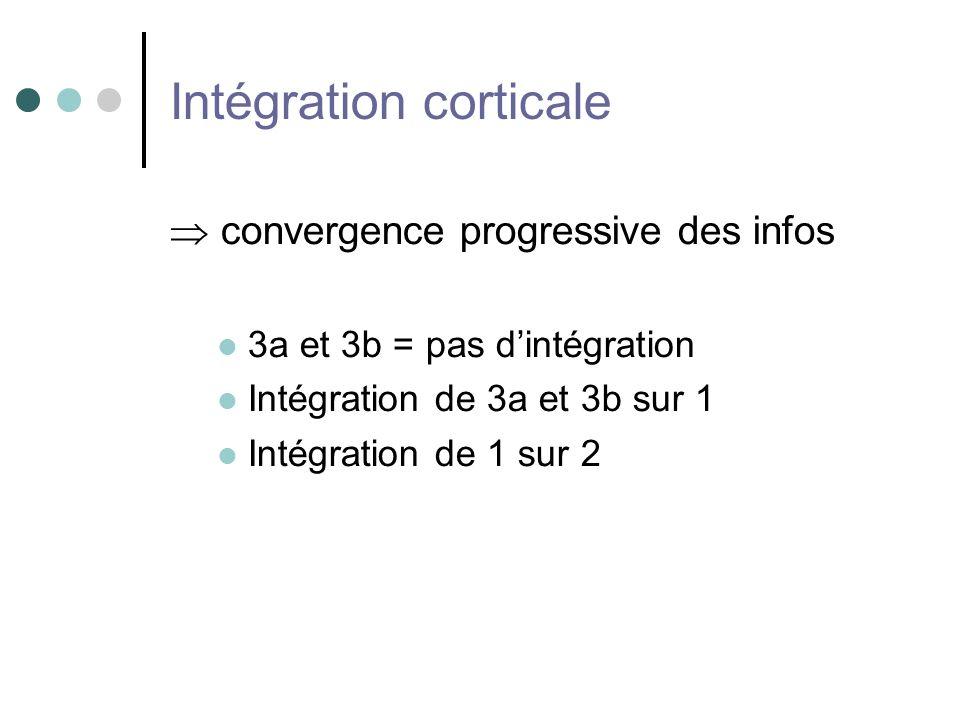 Intégration corticale convergence progressive des infos 3a et 3b = pas dintégration Intégration de 3a et 3b sur 1 Intégration de 1 sur 2