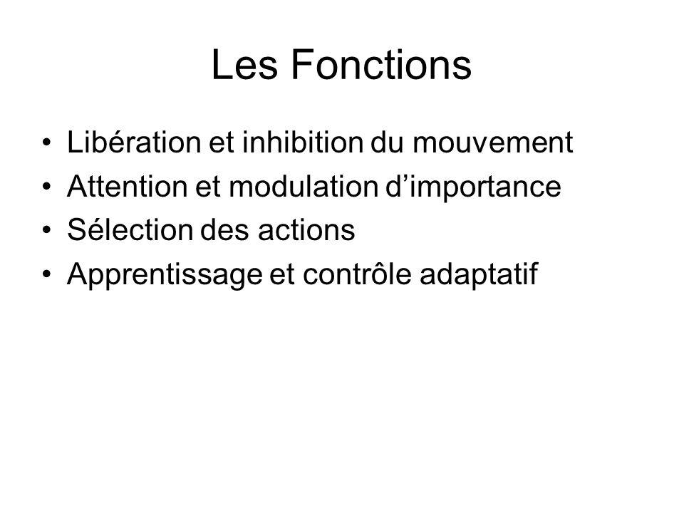 Les Fonctions Libération et inhibition du mouvement Attention et modulation dimportance Sélection des actions Apprentissage et contrôle adaptatif