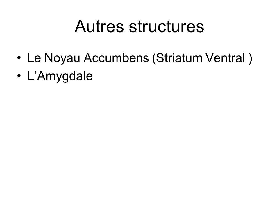 Autres structures Le Noyau Accumbens (Striatum Ventral ) LAmygdale