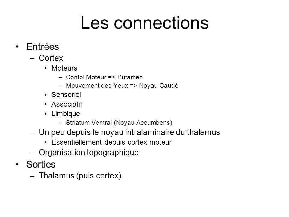 Les connections Entrées –Cortex Moteurs –Contol Moteur => Putamen –Mouvement des Yeux => Noyau Caudé Sensoriel Associatif Limbique –Striatum Ventral (