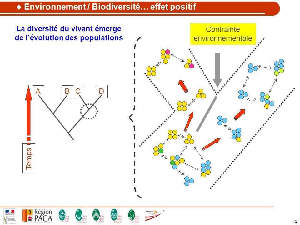 12 La diversité du vivant émerge de lévolution des populations AB C Temps D Contrainte environnementale Environnement / Biodiversité… effet positif