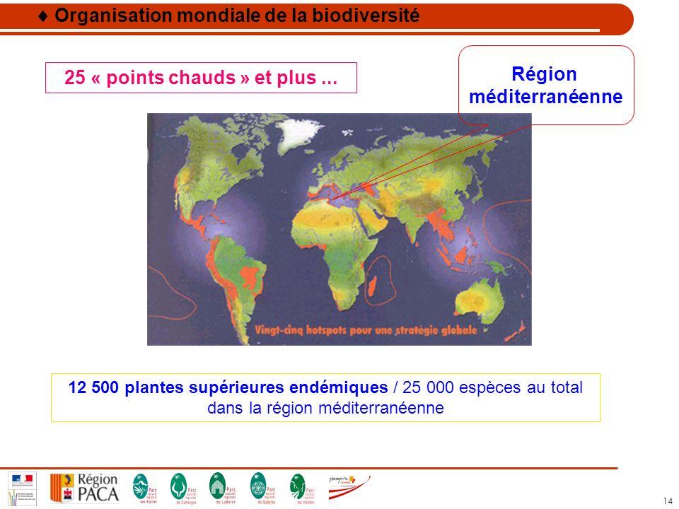 14 25 « points chauds » et plus... 12 500 plantes supérieures endémiques / 25 000 espèces au total dans la région méditerranéenne Région méditerranéen