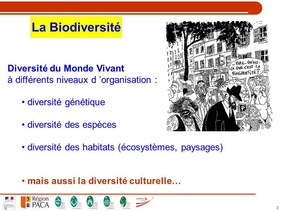 3 La Biodiversité Diversité du Monde Vivant à différents niveaux d organisation : diversité génétique diversité des espèces diversité des habitats (éc