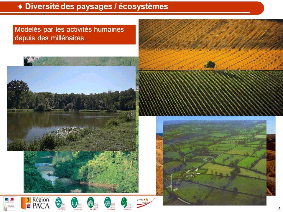 5 Diversité des paysages / écosystèmes Variété d habitats constitués de communautés dorganismes en interaction avec leur environnement Modelés par les