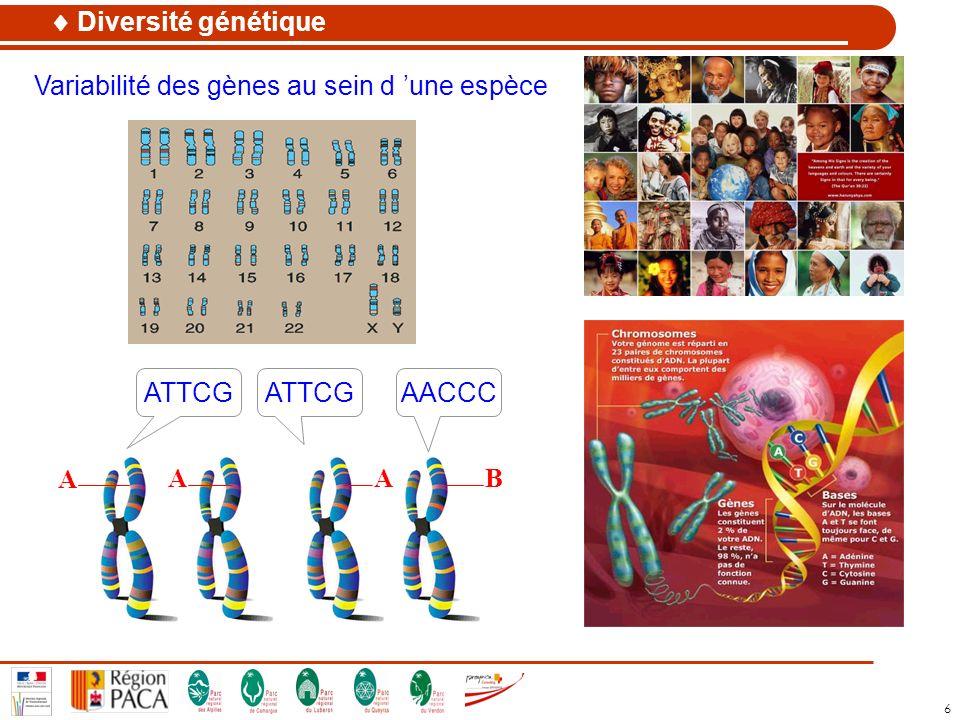 6 Variabilité des gènes au sein d une espèce Diversité génétique ATTCGAACCCATTCG A AAB