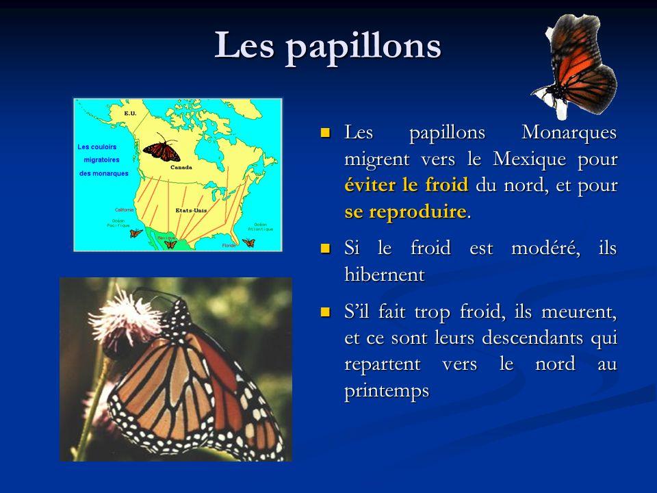 Les papillons Les papillons Monarques migrent vers le Mexique pour éviter le froid du nord, et pour se reproduire. Si le froid est modéré, ils hiberne