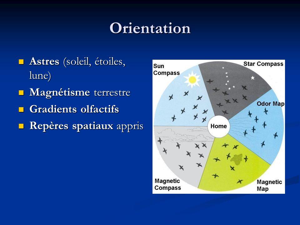 Orientation Astres (soleil, étoiles, lune) Astres (soleil, étoiles, lune) Magnétisme terrestre Magnétisme terrestre Gradients olfactifs Gradients olfa