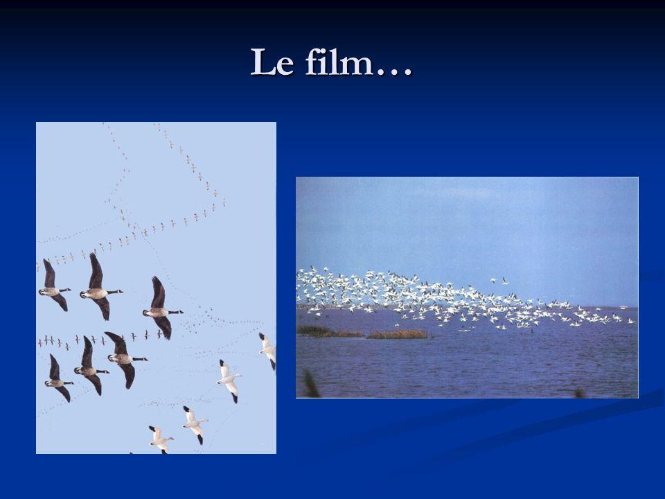 Le film…